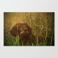 daschund Canvas Prints featuring Evening Photo Shoot by Dorothy Pinder