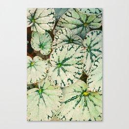 Begonia Leaf Canvas Print