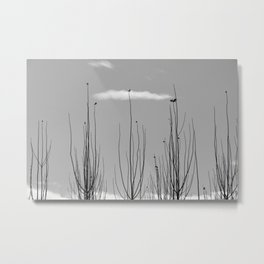 Young Poplars. Looking for the sun... I I I Metal Print