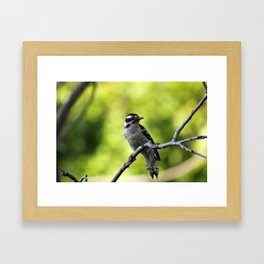 Downy Woodpecker Framed Art Print