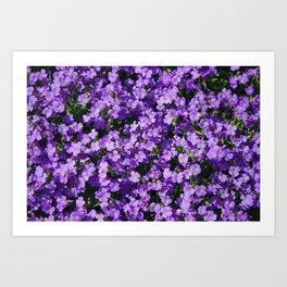 Violets Art Print