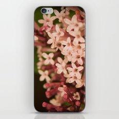 Sweet Lilac Breeze iPhone & iPod Skin