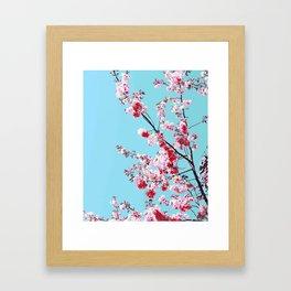 Red Rose Sakura on Bright Blue Background Framed Art Print