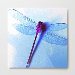 Iridescent Dragon Fly - Digital Photography Art Metal Print