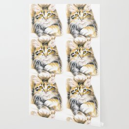 Maine Coon Kitty Wallpaper