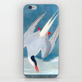 Arctic Tern Bird iPhone Skin