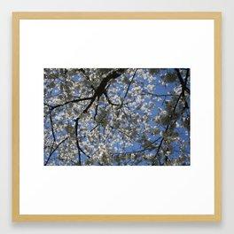 Apple Blossom Sky Framed Art Print