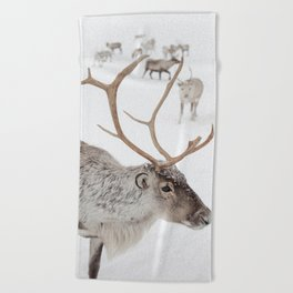 Reindeer With Antlers Art Print | Tromsø Norway Animal Snow Photo | Arctic Winter Travel Photography Beach Towel