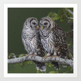 Barred Owls  Art Print