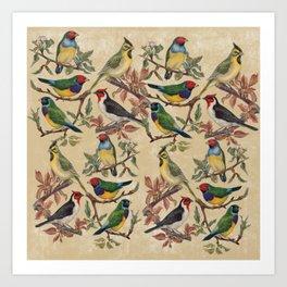 Vintage Birds Art Print