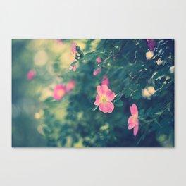 Central Park Roses Canvas Print