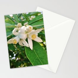 Orange Blossoms Stationery Cards