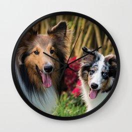 Cute sheltie dogs Wall Clock