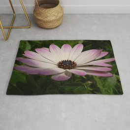 Side View of A Pink and White Osteospermum Rug
