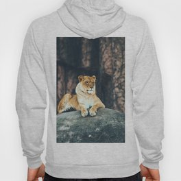 Lion on the rock Hoody