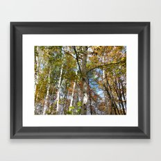 Birch Trees in Autumn Framed Art Print