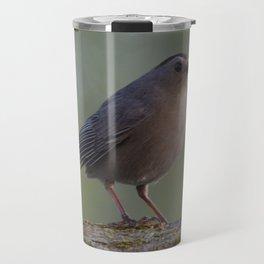 Gray Catbird near Sunrise Travel Mug