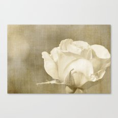 Cream White Rose Canvas Print