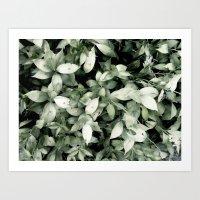 plant Art Prints featuring Plant by Alfredo Lietor