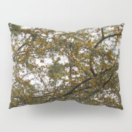 Acacia Golden Mimosa Pillow Sham