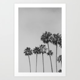 Black and White Palm Trees Art Print