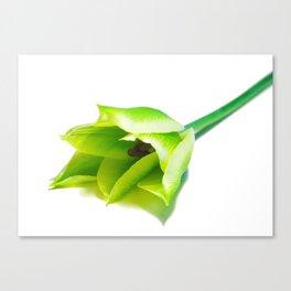 Green Tulip Canvas Print