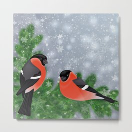 Bullfinch birds on fir tree branches Metal Print