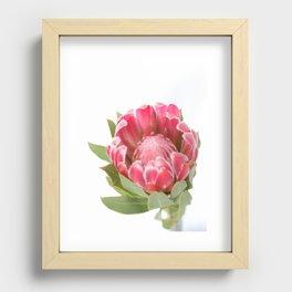 Dark Pink Protea Recessed Framed Print