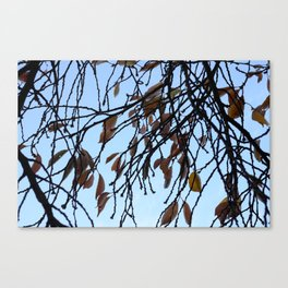 Fade and Fall Canvas Print