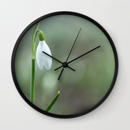 Snowdrop spring flowers close-up macro with selective focus Wall Clock