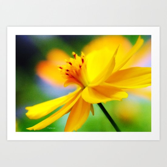 A Bright Sunny Day for Flowers Art Print