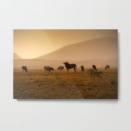 Herd of Wildebeest grazing in South Africa Metal Print