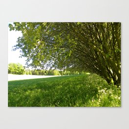 A Shady Spot Beneath the Trees  Canvas Print