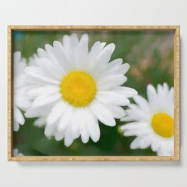 Daisies flowers in painting style 12 Serving Tray