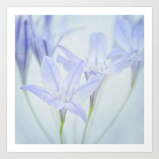 triplet lily Art Print