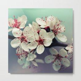 Cherry Blossom, Cherryblossom, Sakura, Vintage Style Metal Print