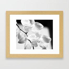 Conner  Framed Art Print