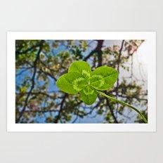 Four-Leaf Clover & Sun-flare Art Print