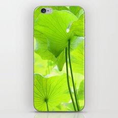 Lotus Leaves iPhone & iPod Skin