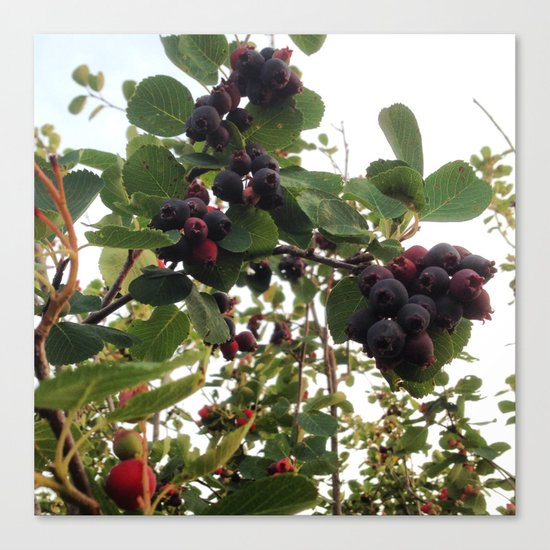 Beautiful Wild Berries Canvas Print