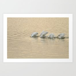 Whimsical White Pelicans Dance Art Print