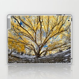 Gorgeous Big Tree Laptop & iPad Skin