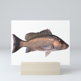 Gray Snapper Mini Art Print
