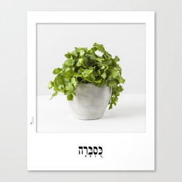 coriander herb poster with hebrew letters for the kitchen Canvas Print