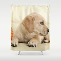labrador Shower Curtains featuring Labrador puppy by Elisabeth Coelfen