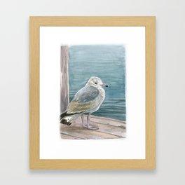 Study of a Juvenile Ring-billed Gull Framed Art Print