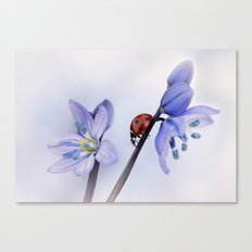 Ladybird on purple flower Canvas Print