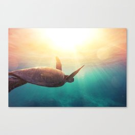 Sea Turtle - Underwater Nature Photography Canvas Print