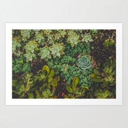 Botanical No. 4224 Art Print