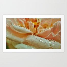 Rainy Rose Art Print